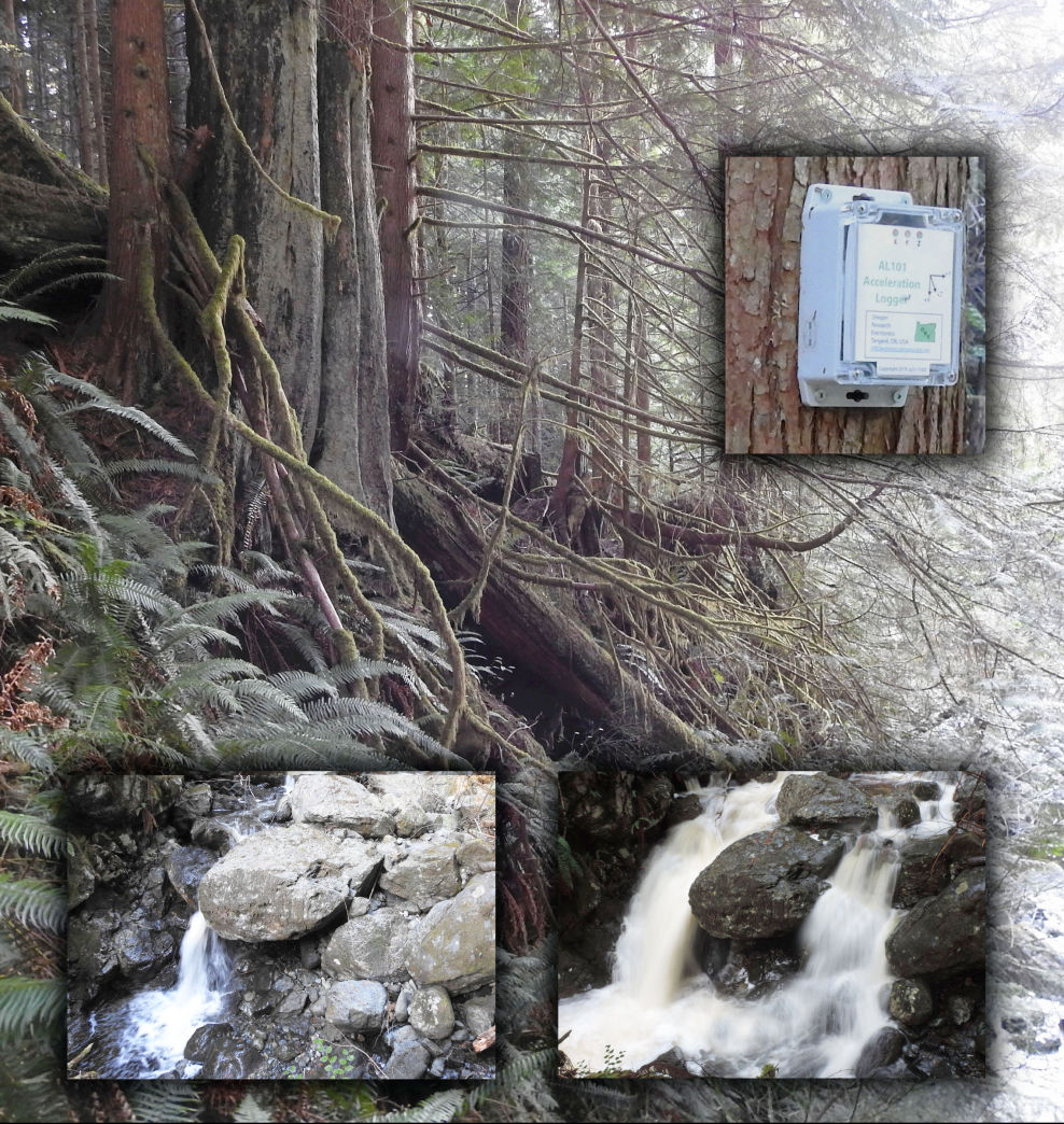 High Stream Flow Induced Tree Vibration